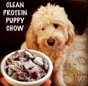 Clean Protein Puppy Chow